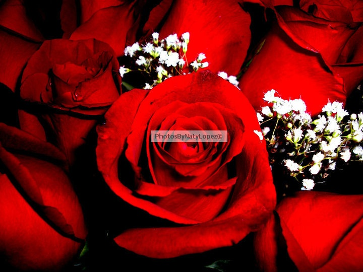 Inspired by a dozen roses... <3