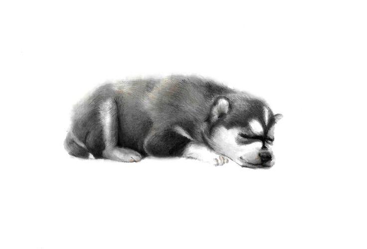 illust,일러스트,강아지,그림