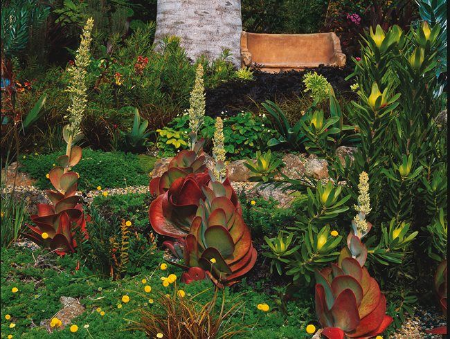 A Mediterranean Garden In Berkeley Mediterranean Garden