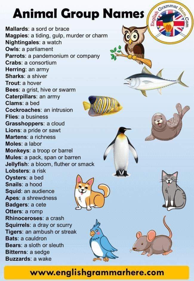 Pin By Joey Chee On Homeschool Animal Groups Animals Name List Learn English