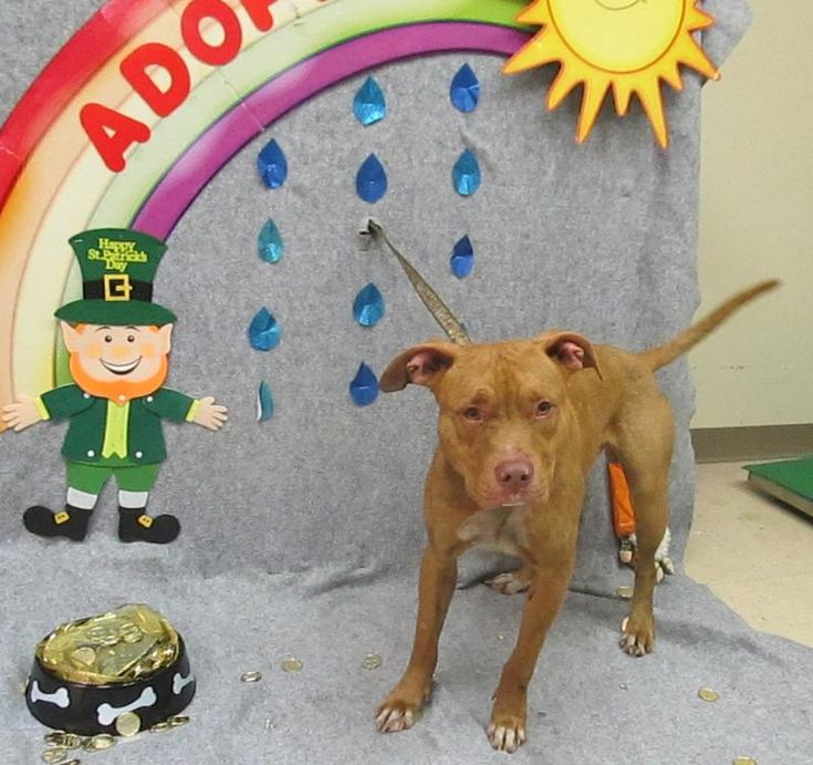 """Was still alive on 3-1-18! HURRY! Copper, 2 yrs old, 49 lbs, """"very friendly"""". HIGH KILL pound!"""