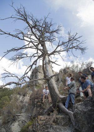 Tree rings reveal nightmare droughts in Western U.S..