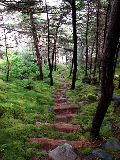 moss and moss.: Forests Step, Newfoundland Canada, Forests Pathways, Beauty Green, Beauty Place, Beauty Things, Forests Paths, Coast Trail, Side Trail