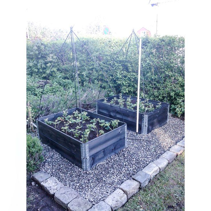 Maj - Jordgubbar i pallkragar i vår trädgård / strawberries in pallets in our garden