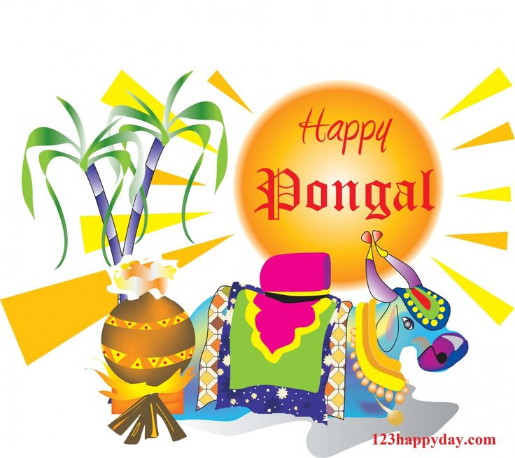 best pongal images images pongal images happy  pongal festival makara sankranti lohri festival photo gallery featuring how the festival is celebrated all over