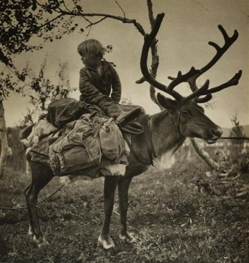 Saami/Norwegian Nomad Boy on a Reindeer. circa 1908 ---- relatives up there... only about one hundred years ago . . . Can you believe what an explosion of changes globalism has brought? Wild...