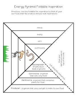 Ecological Pyramid Worksheet energy pyramid foldable ha definition, visual aids and food ...