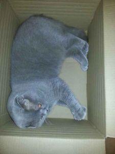 Soooo knuffig: Graue Kätzchen zum Dahinschmelzen - Seite 1