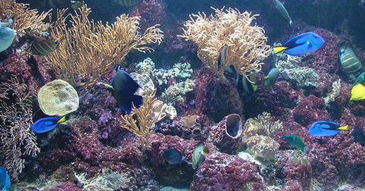 ¿Cuántos lúmenes hay en una luz fluorescente de 40 vatios?. Las bombillas fluorescentes se utilizan en acuarios para promover el crecimiento de las plantas y para sacar los colores de los arrecifes de coral y de los peces tropicales e invertebrados. Por lo general, son mucho más eficientes que las bombillas incandescentes porque producen más luz y menos calor. La luminosidad de una bombilla puede medirse ...