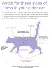 Free #veterinary client handout: Watch for these signs of illness in your older cat - Veterinary Economics - dvm360