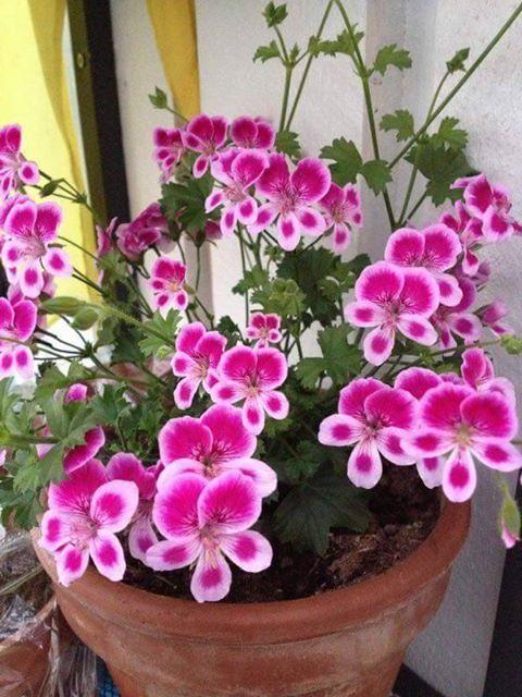 Günler. Haftalar. Ay N yılı Hadi gel.... Hep şöyle dedik: Güle güle ya da hoş geldin Ama ama Ben seni Çiçekleri sever Asla veda etme... Sevilen arkadaşlar ☺ ☺