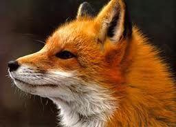 Symbolic Meaning of Fox Spirit Animal | Fox Symbolism