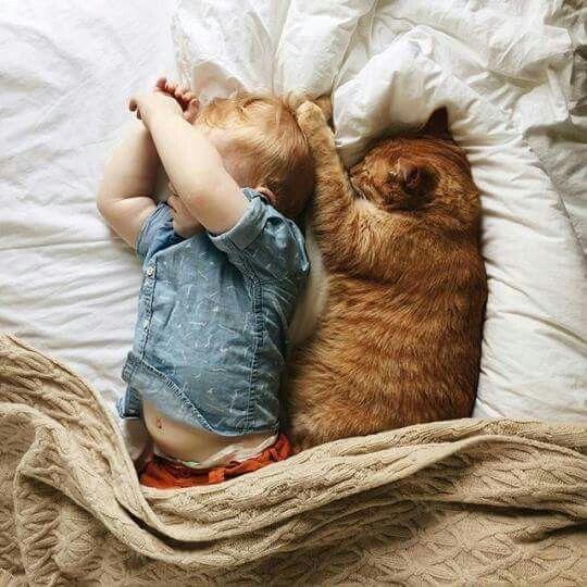 #Lustig #Katze u Baby daliciasavoie