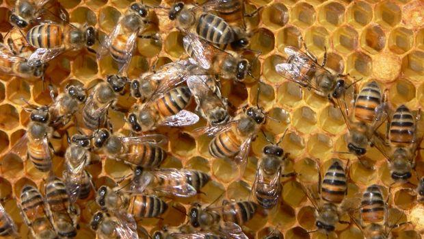 Bee-Keeping - Home made honey