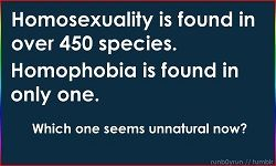 10 Reasons Why Homophobia Makes No Sense (Part 1) - ULC Blog - Universal Life Church