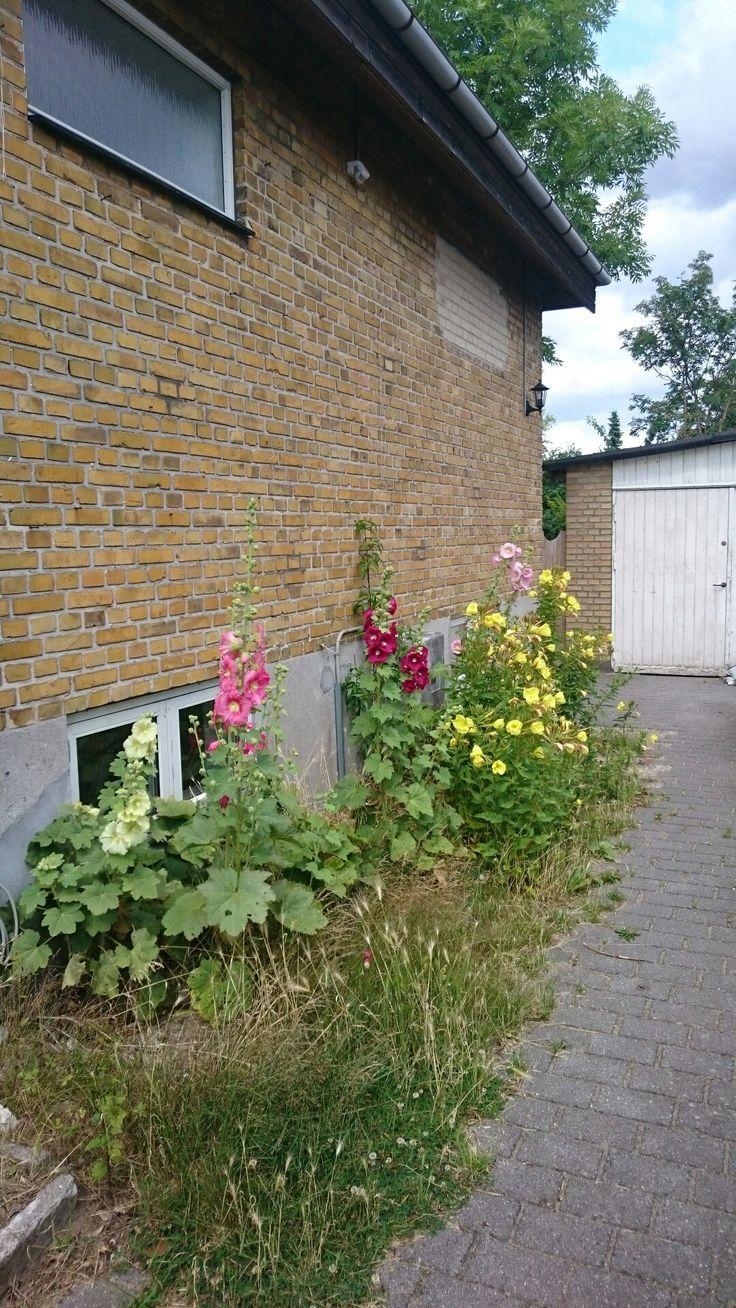 Stokroser og klokken 8 blomster