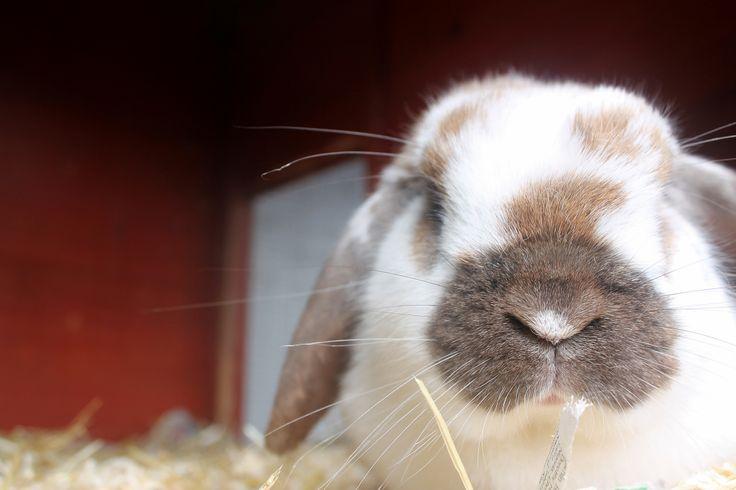 Day 24- Animal. My rabbit sugar.