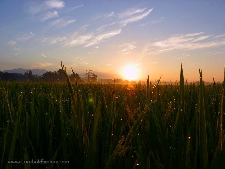 Sunrise at Parampuan village, West Lombok, Indonesia. For more information, please visit www.LombokExplore.com.