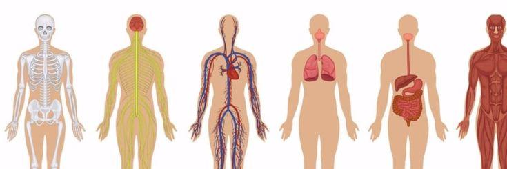 Veel mensen hebben het zeer moeilijk met hun lichaam en denken niet wat hun lichaam eigenlijk allemaal in staat is om te doen. Veel mensen kijken alleen naar hun uiterlijk en ze weten niet wat v