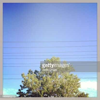 Stock Photo : Power lines crossing in front of large tree
