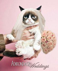 55 best cats in wedding dresses images on pinterest cat wedding 17a2cc8741df65e73dcee1e7ad38cbd4g 236288 junglespirit Choice Image