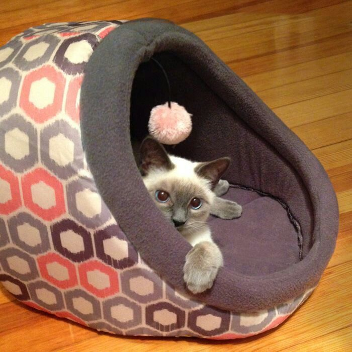 Cat Bed With A Few Alterations Here And There I Can Easily Make This One
