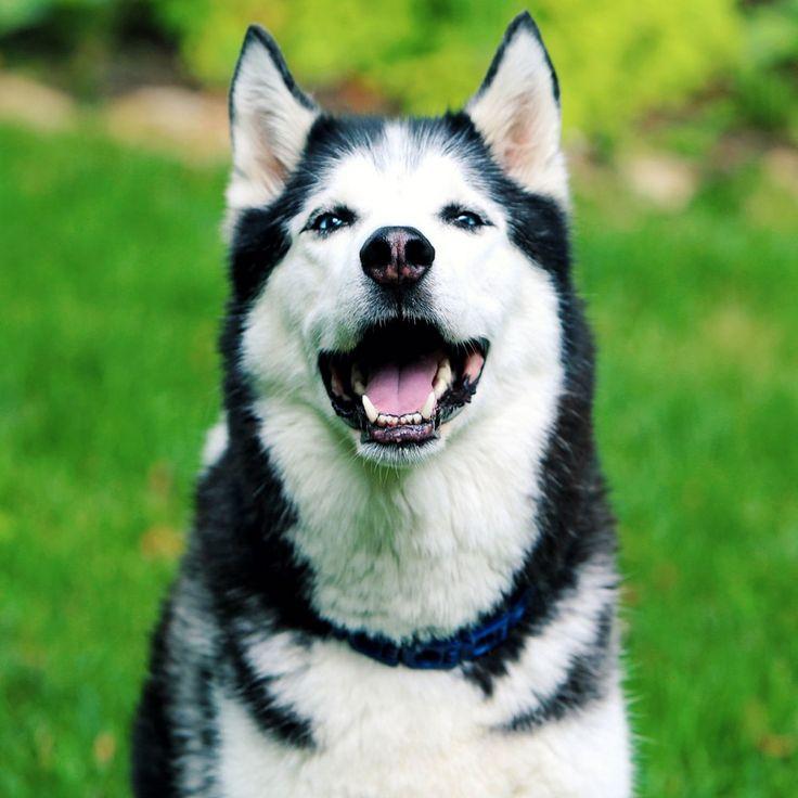 Welcher Hund passt zu mir? Mach den Test und finde es heraus!