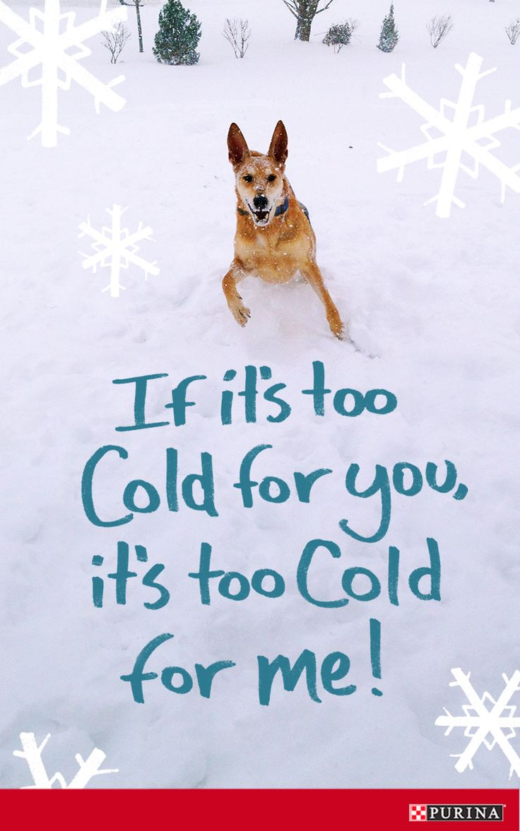 Snow safety is important during the Winter. If the weather is too cold for you then it is too cold for you dog. Read more dog safety tips to keep in mind as the temperature drops!