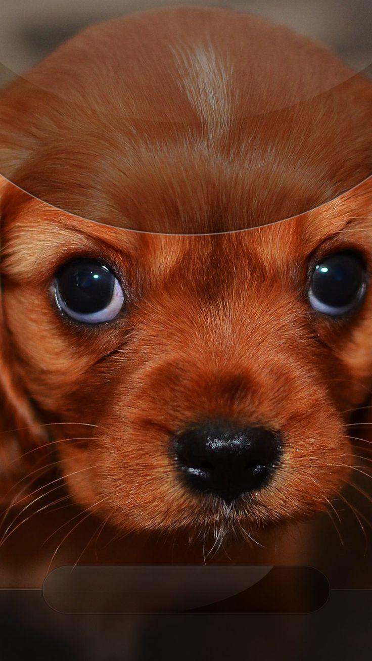 TAP AND GET THE FREE APP! Lockscreens Art Creative Puppy