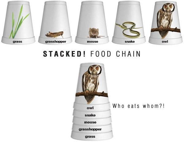 Using a great visual model to understand the food chain