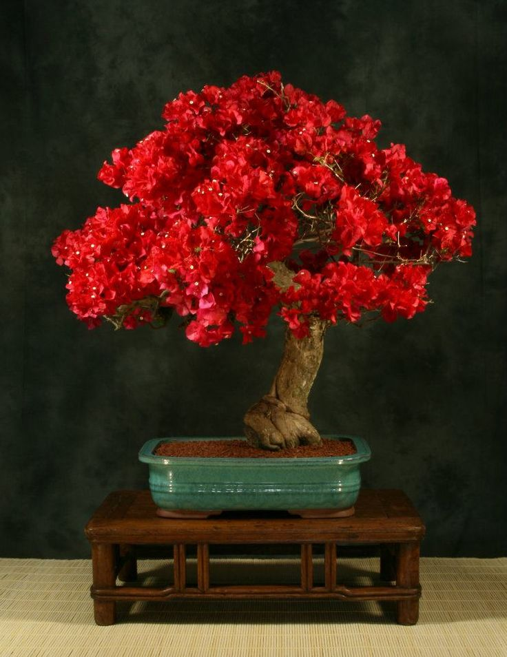 28 best bonsai trees images on pinterest bonsai trees bonsai art the most beautiful and unique bonsai trees in the world fandeluxe Choice Image
