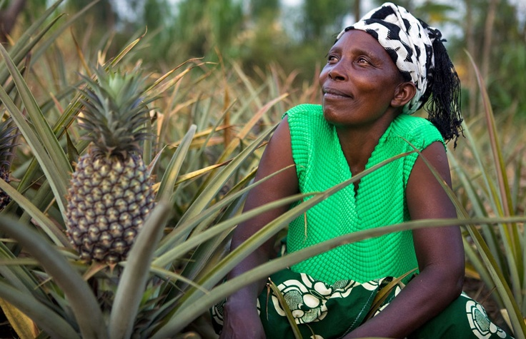 Thanks to your support, Godelive and 800 other women farmers in Rwanda have set themselves up as pineapple sucker growers and sellers.         See how their success has had a wider impact beyond their fields...     https://www.oxfamireland.org/blog/sweet-benefits-of-pineapples    Photo: Simon Rawles/Oxfam