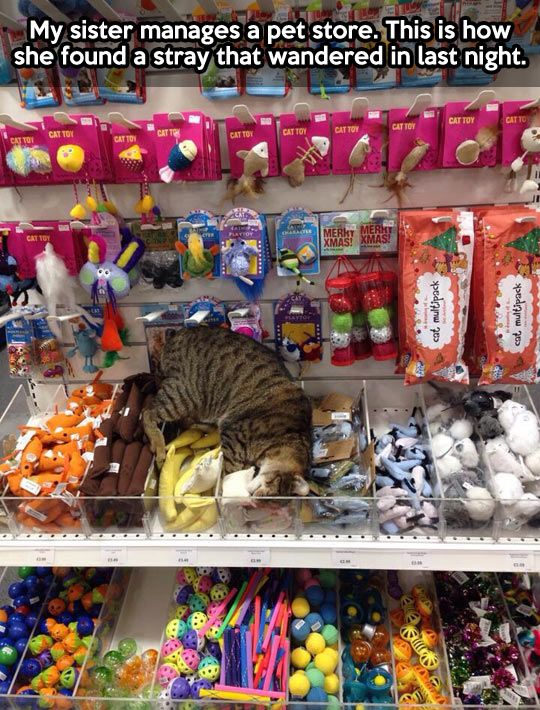 * This little guy just found cat heaven…