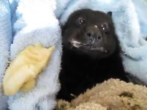 ▶ BAT EATING BANANA - YouTube; I promise this will be the best thing you'll see all week