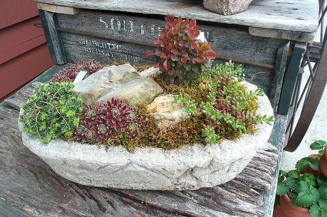 Planted Succulent Oval | Flickr - Photo Sharing!