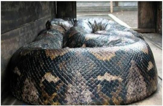 Snakes: Terror and Shock: the World's Largest Snakes Ever