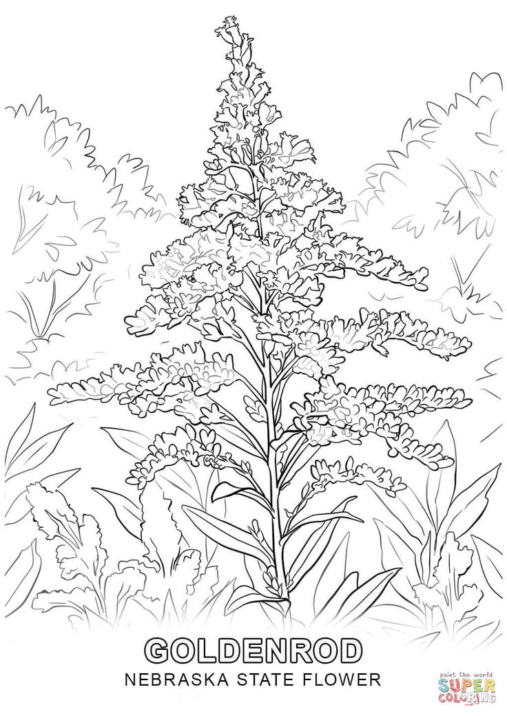 Nebraska State Flower Coloring Page