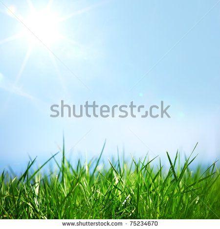 stock-photo-green-grass-75234670.jpg (450×470)
