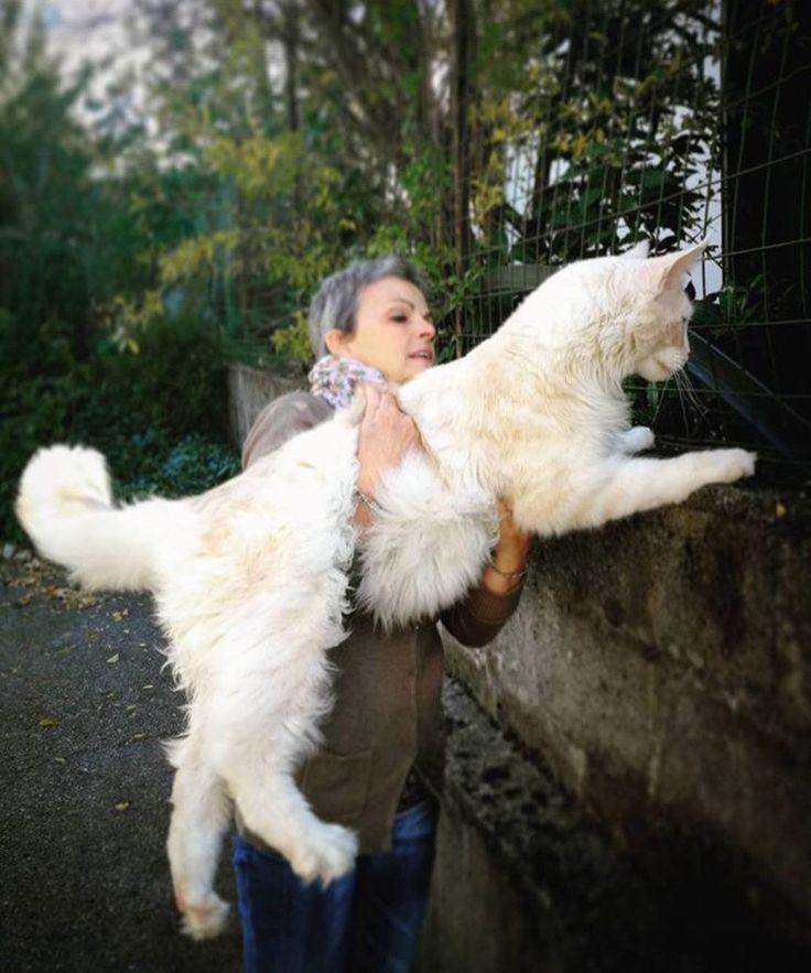 Damn, this woman owns a mountain lion! hella big cat!!