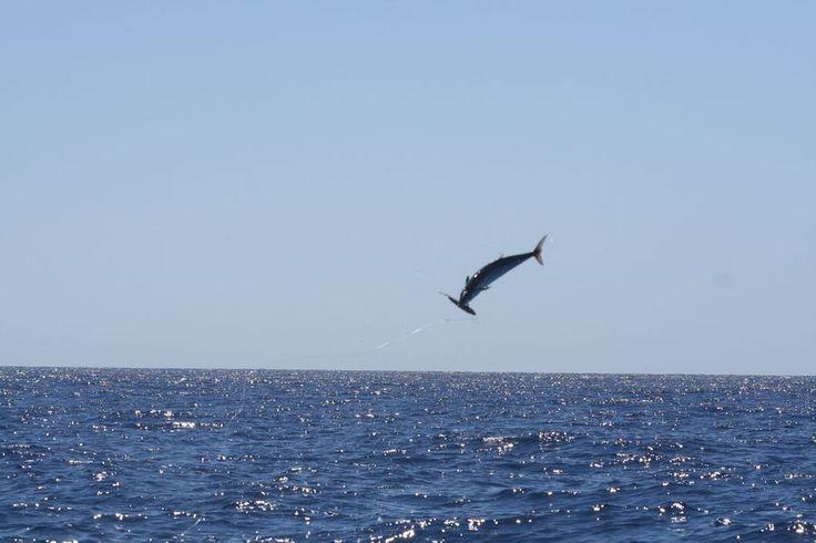 Jumping than eating....Fishting Fishing...