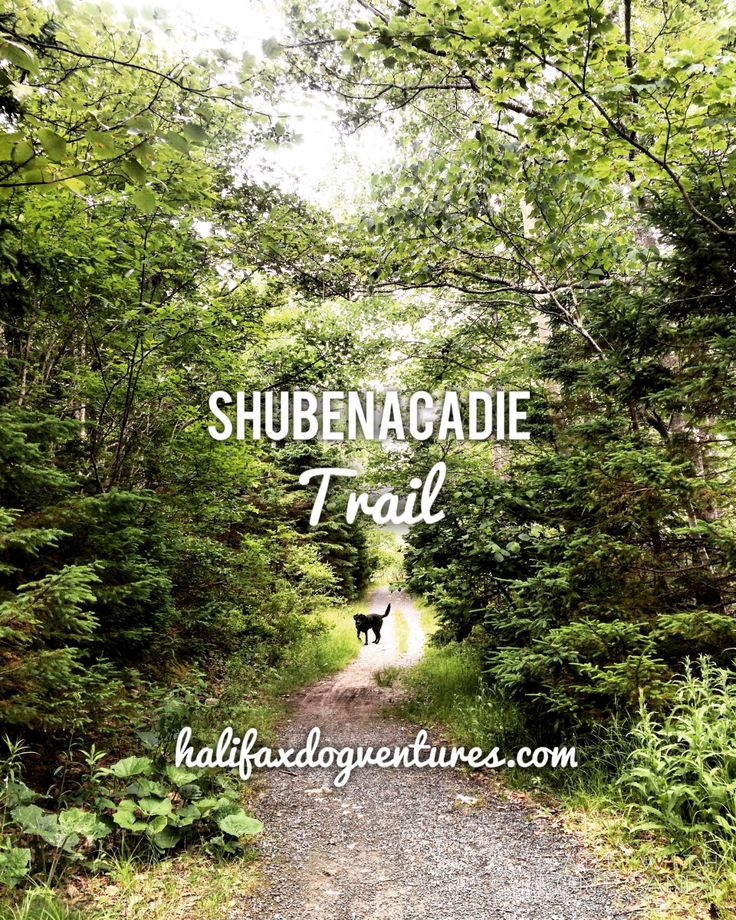 The Shubenacadie Trail connects to the iconic Shubie Park in Dartmouth, NS. But it's a beautiful destination in its own right. halifaxdogventures.com