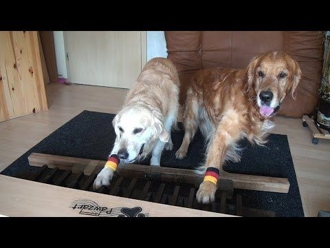 Piano dogs visiting nursing home - Klavierhunde im Pflegeheim - YouTube