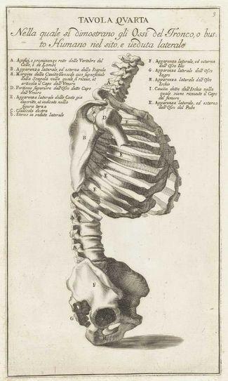 Tavola Quarta. Bones of the spine, ribs and pelvis. FromAnatomia per uso et intelligenza del disegno ricercata non solo su gl'ossi, e muscoli del corpo humano byBernardino Genga, 1691 (https://www.pinterest.com/pin/287386019945000480).