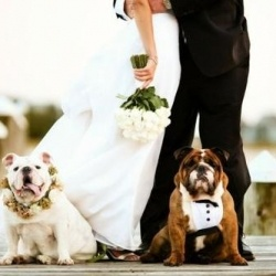 Want to include your pooch in wedding day festivities? Check out our favorite outfits and where to find the perfect gear. #weddinggawker