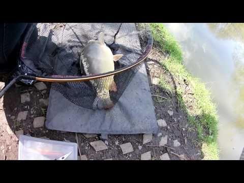 Pêche à l'anglaise en étang  #anglaise #etang #peche