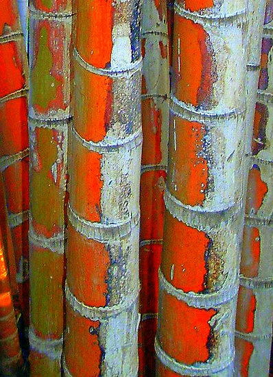 """'Bamboo Art' by Larry Lingard-Davis (This is a photographic print but I am not sure if he """"worked"""" with the colors)"""
