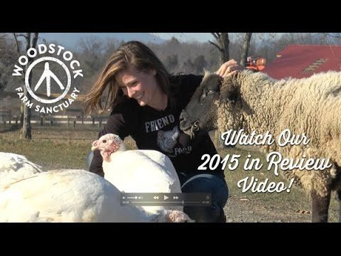 Year in Review: Woodstock Farm Sanctuary - YouTube. Heartwarming ♡ go VEGAN for 2016!