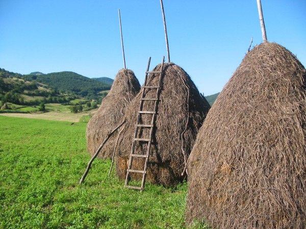 Rumanian haystacks
