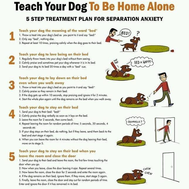 Are You And Your Dog Suffering From Separation Do You Dread