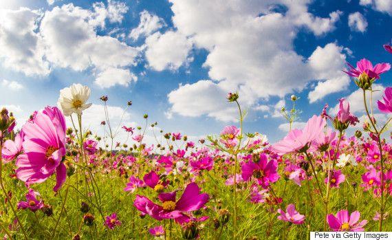 秋のコスモス畑がとってもきれい。さあ、花散歩に出かけよう(画像)